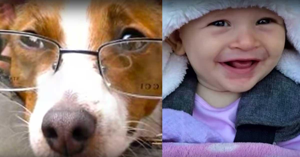 dog teaches baby